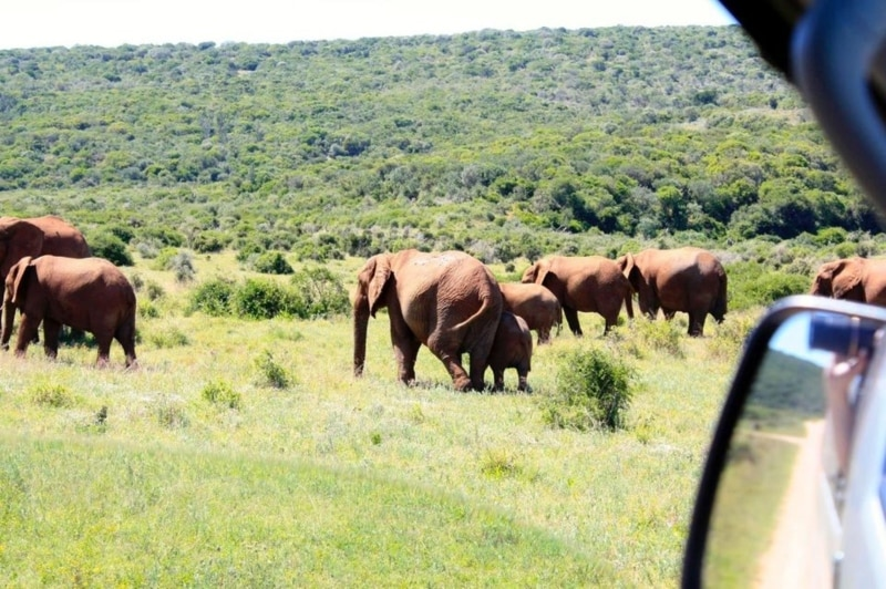 Ver animais em Cape Town