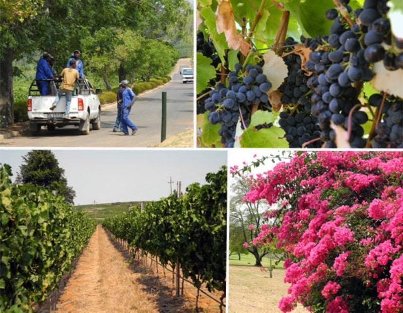 Vinhos em Cape Town