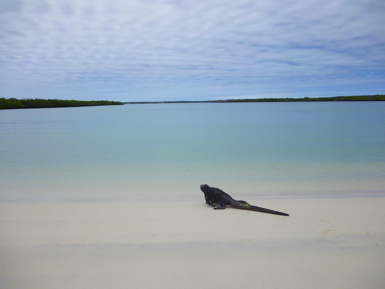 Qual a melhor praia selvagem do mundo?