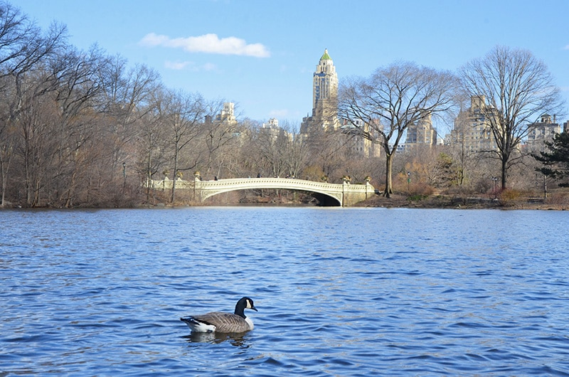 Tour no Central Park com guia