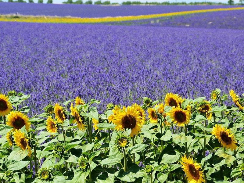 Lugares da Provence