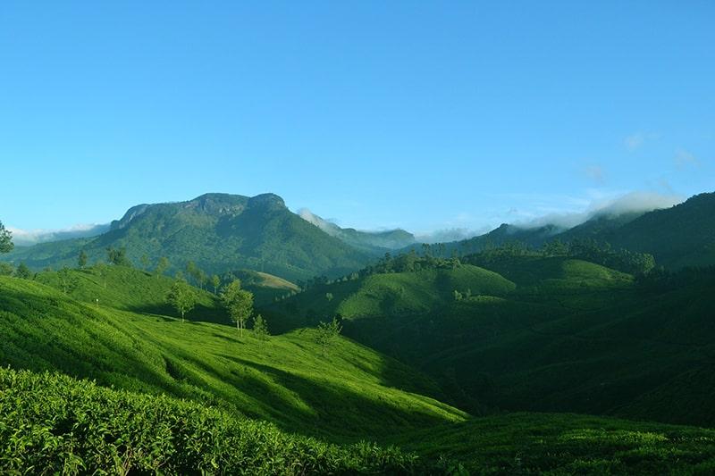 Plantações de chá Índia
