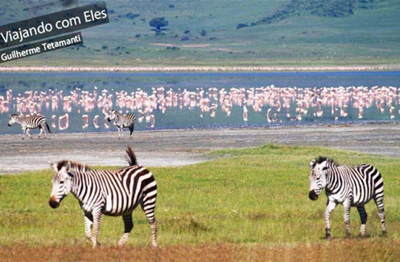 desejo de viagem safari na Africa