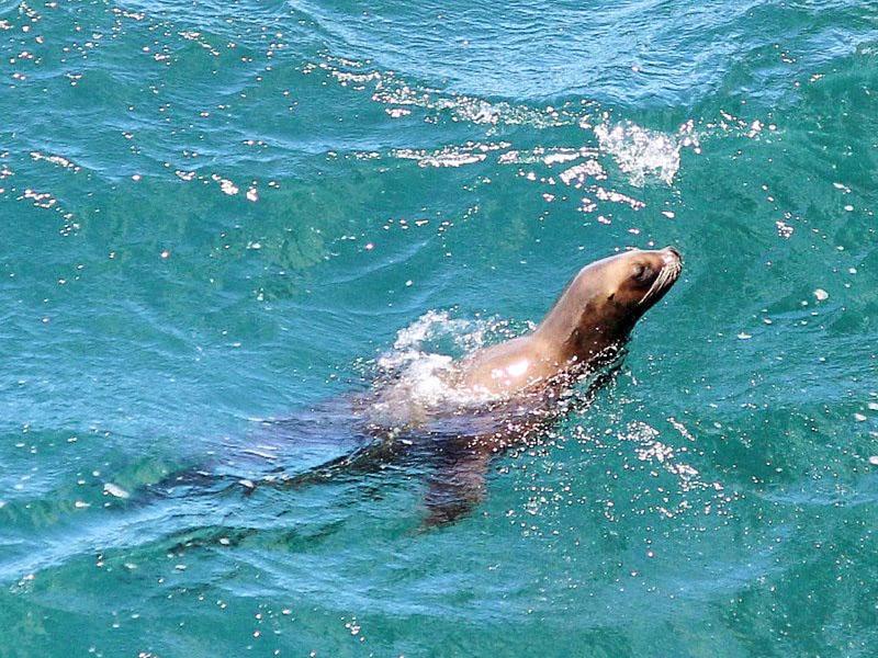 Onde ver animais marinhos na Argentina.