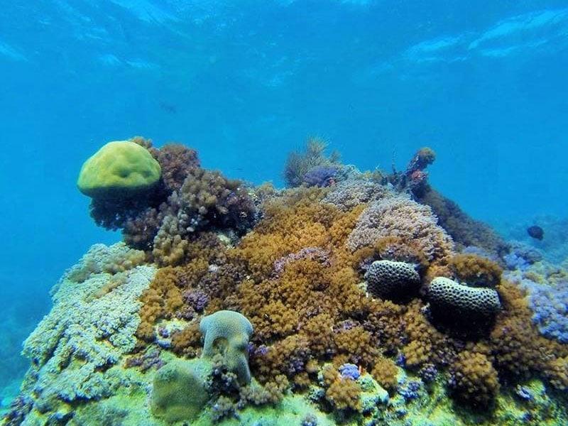 Lugares para praticar snorkel no Nordeste