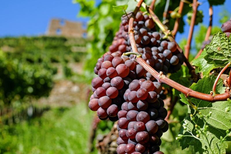 Rota do vinho da França