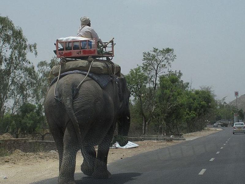 Transporte em Nova Deli em bichos