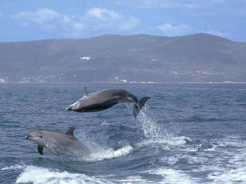 observação de golfinhos em setúbal