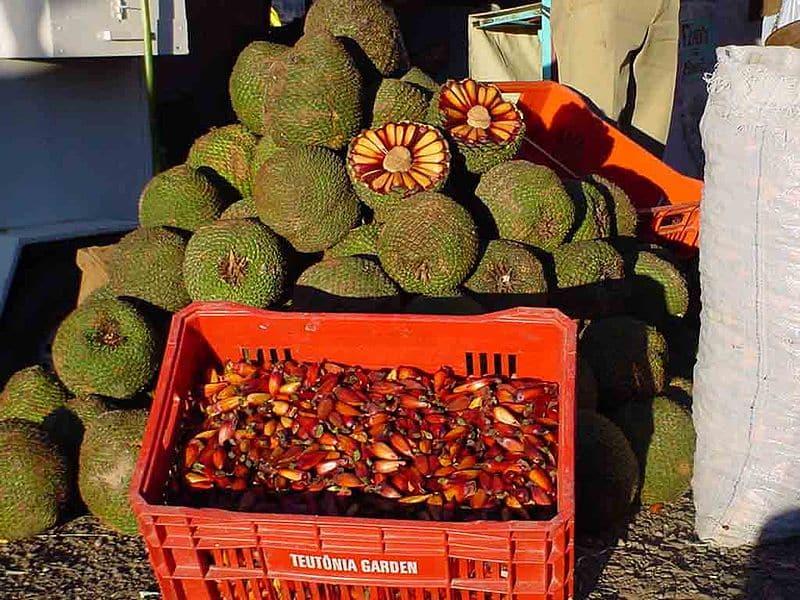 Comidas para trazer das compras em Curitiba