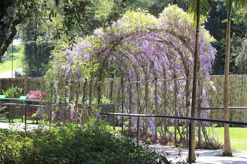 Parque mais bonito de Curitiba