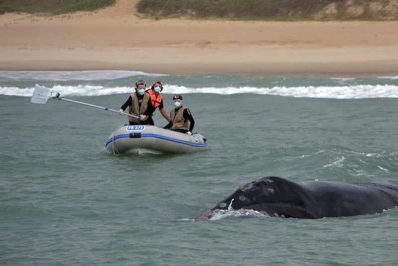 onde ver baleias no Brasil