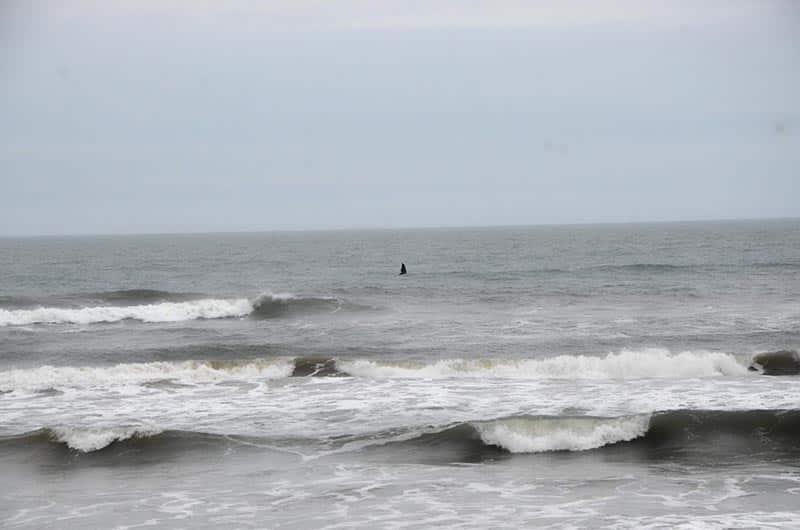 Rota da Baleia Franca, em Imbituba