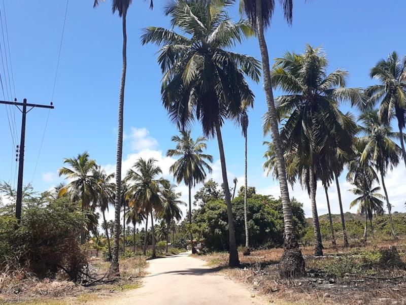 Férias em Alagoas