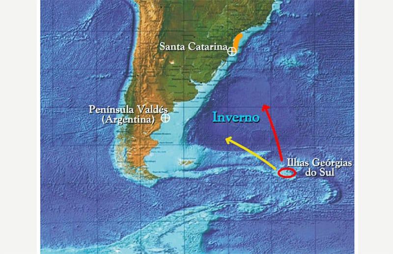 Onde ver baleias em Santa Catarina