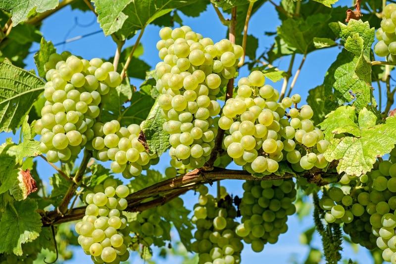 Vinho Verde em Braga