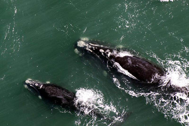 quanto tempo vive uma baleia