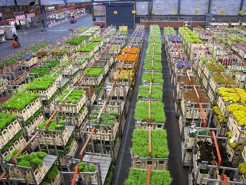 maior leilão de flores do mundo