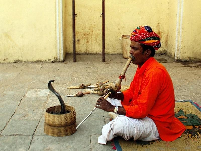 encantadores de cobra em jaipur