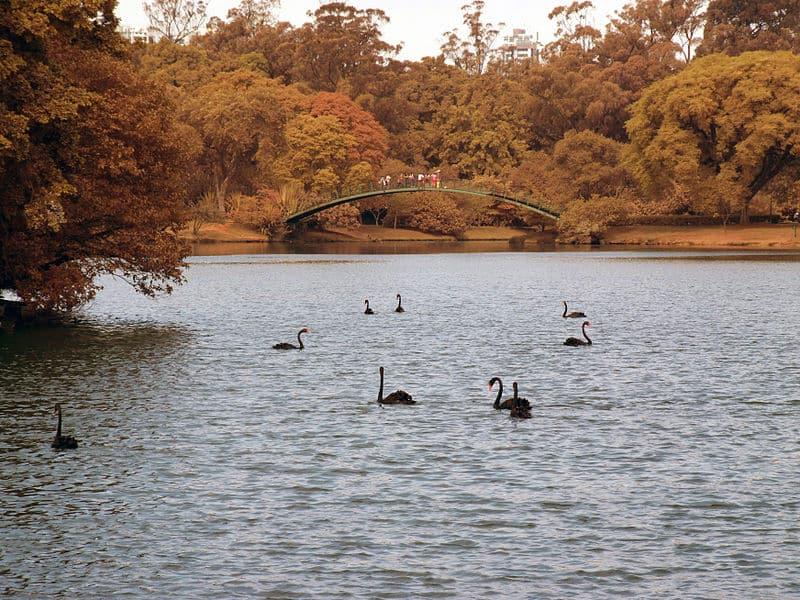 Parque do Ibirapuera natureza