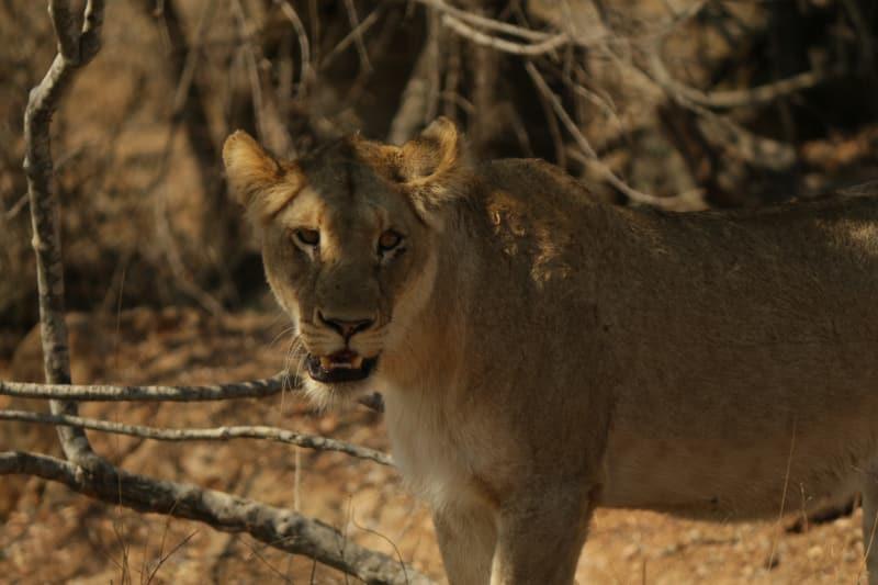 Horário Kruger Park