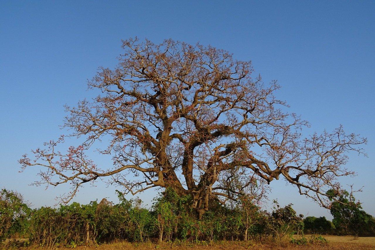 Comunidade do Manguari