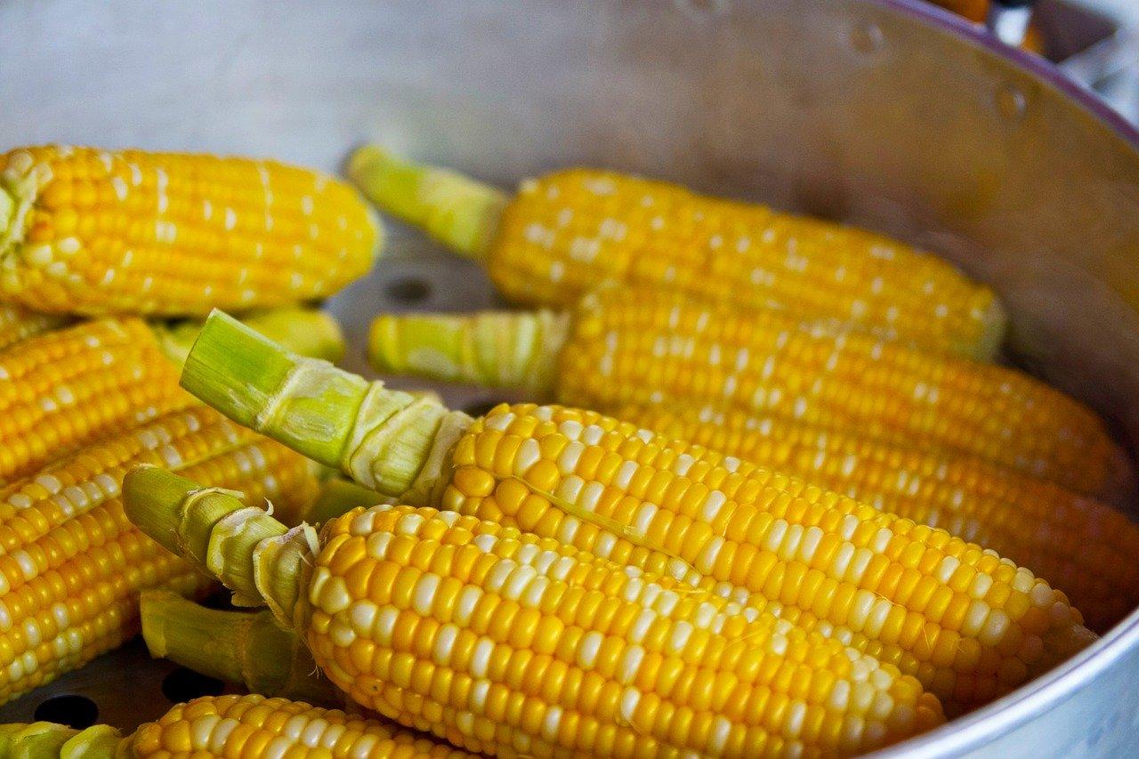 comidas com milho no brasil