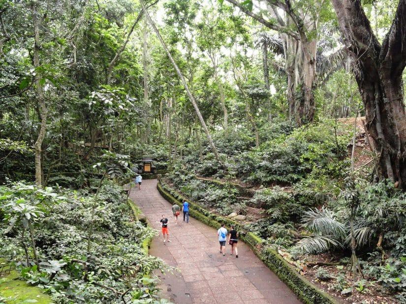 floresta dos macacos bali
