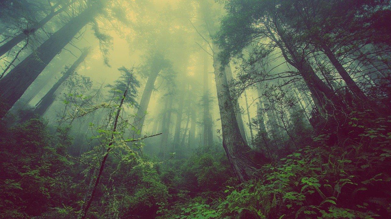 Floresta na Alemanha