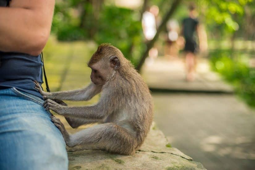 passeios turísticos em Bali