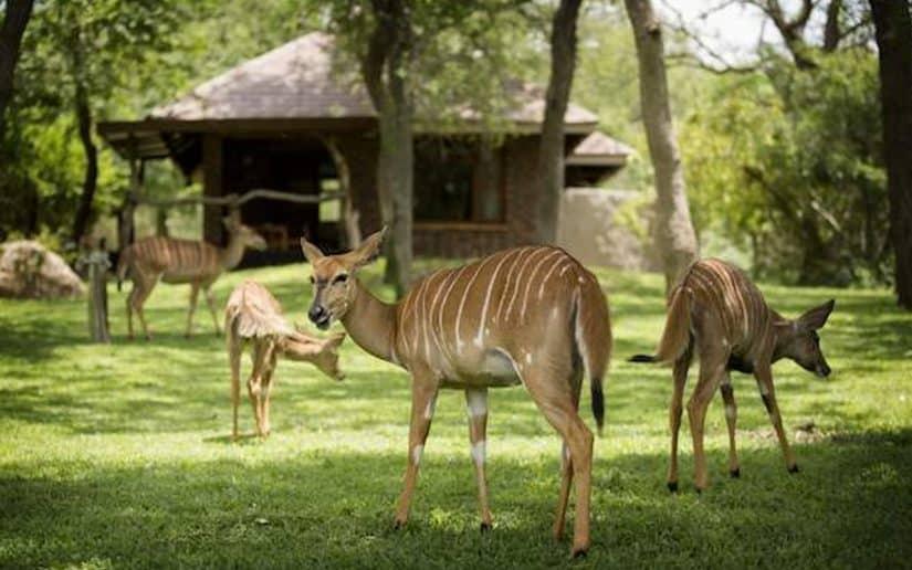 passeios na africa do sul safari