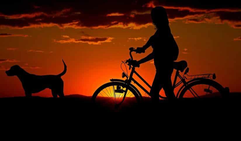 viajar com cachorro para o exterior preços
