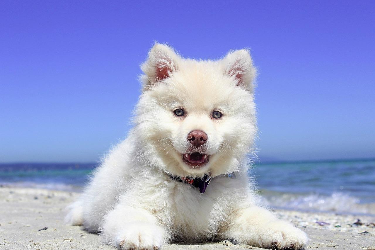 levar cachorro azul