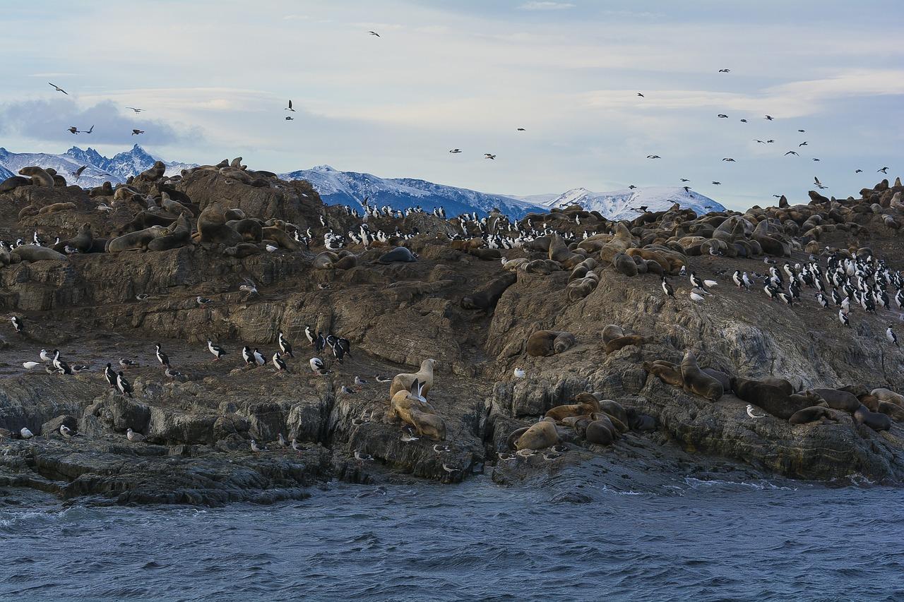 Ilha Martillo Ushuaia
