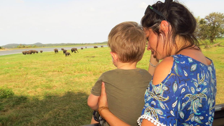 safari elefantes com familia