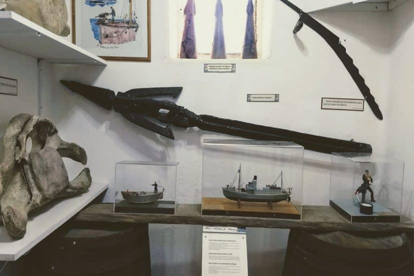 O que ver no Museu Antártico