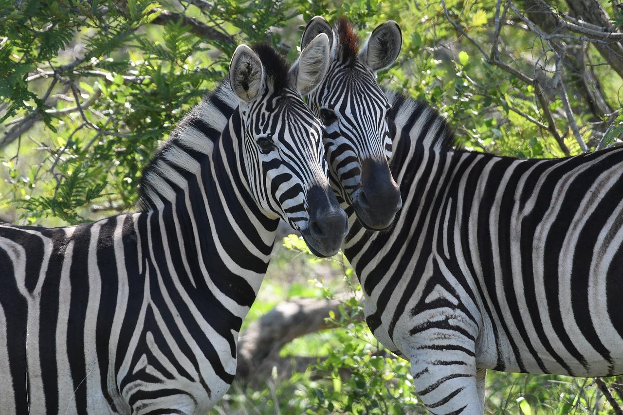 safari kruger