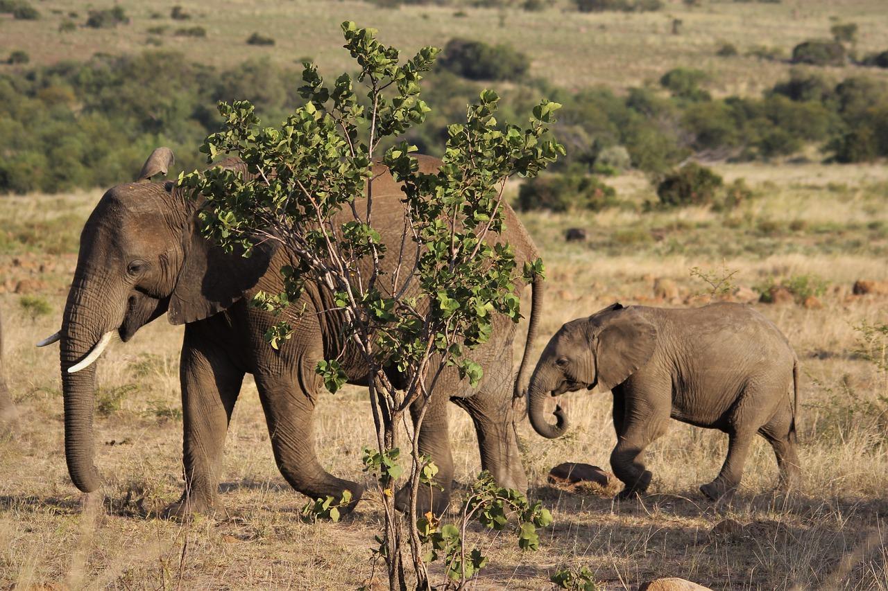 parque pilanesberg safari