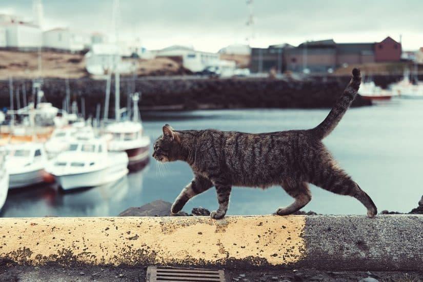 pode Viajar com gato de avião no Brasil