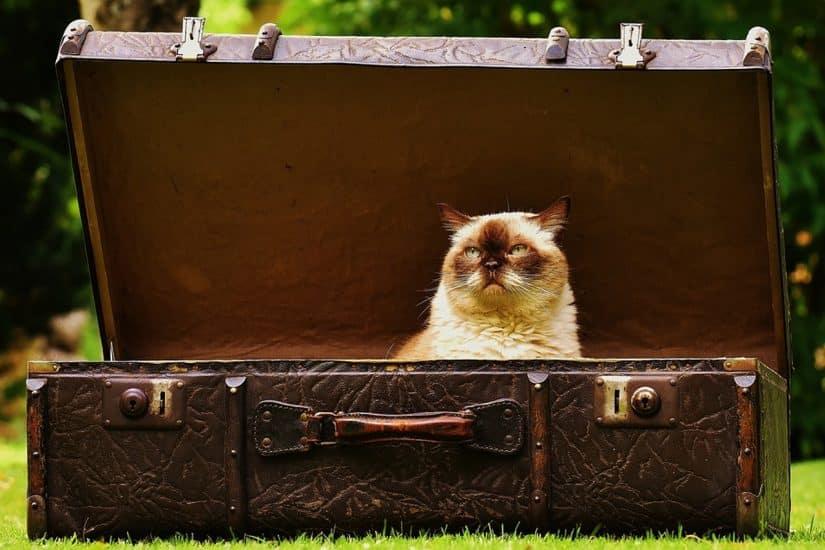 Viajar com gato de avião no Brasil documentos