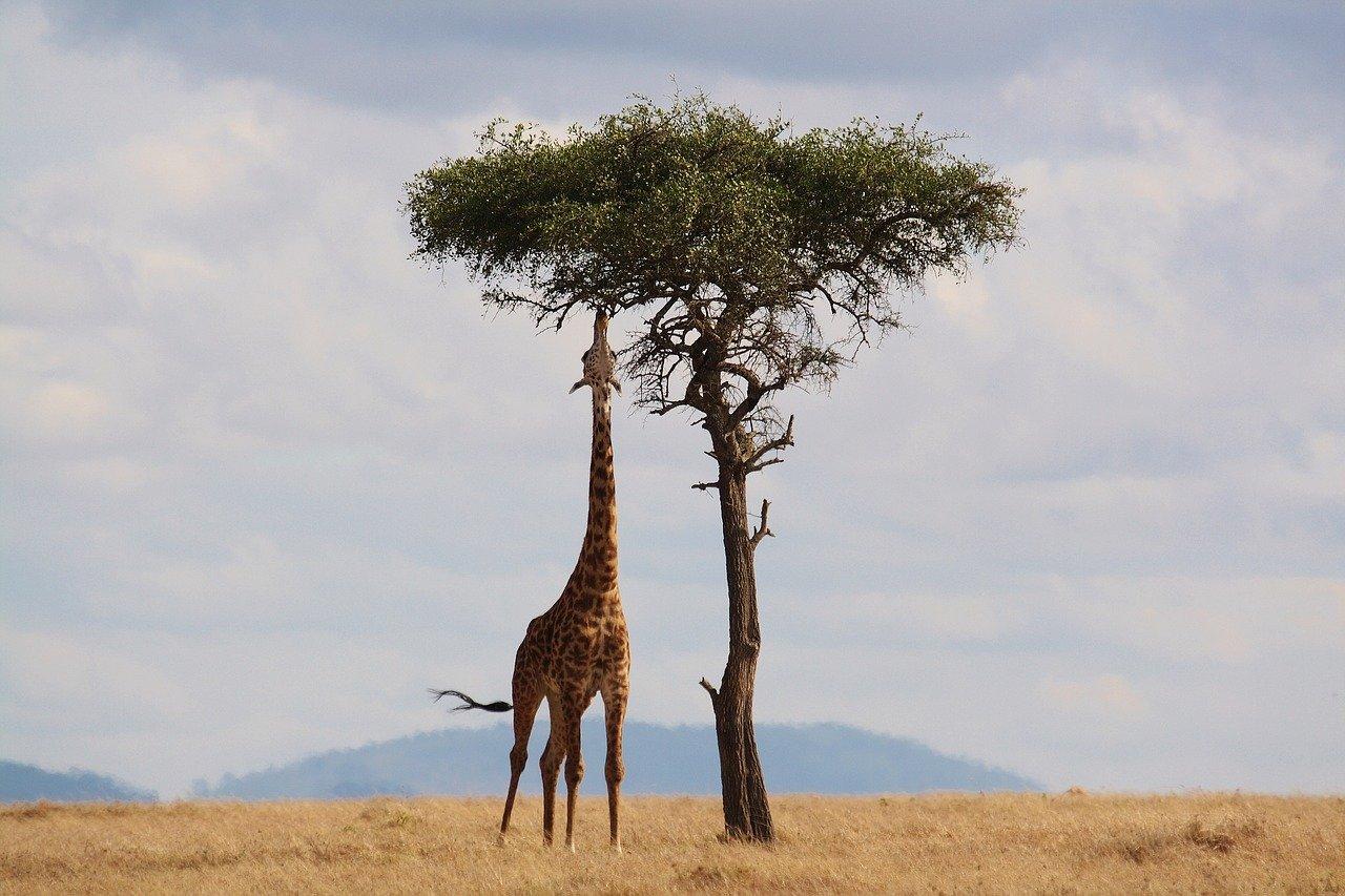 localização da África