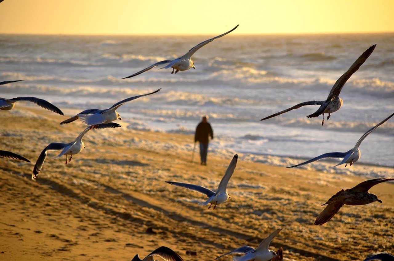 fotos de praia no brasil