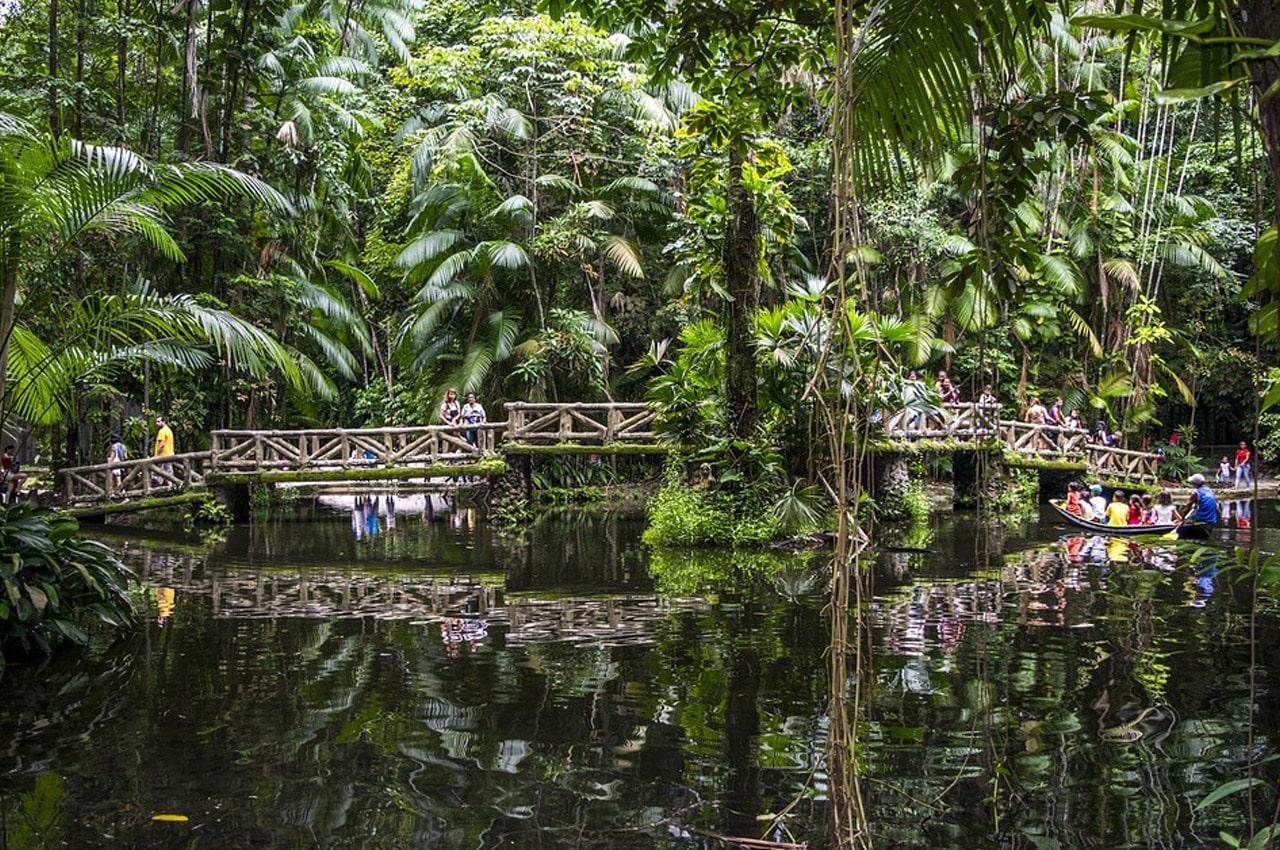 Floresta Amazônica fotos