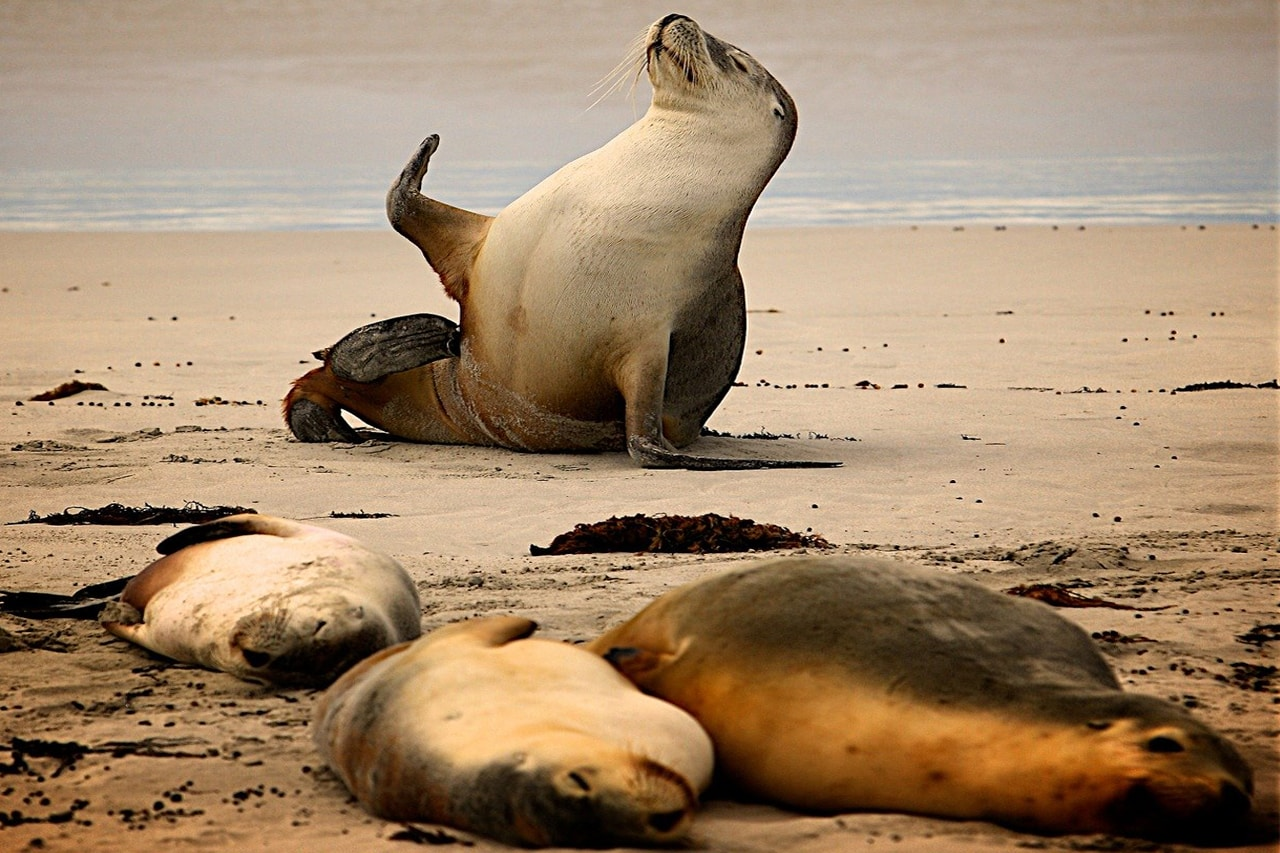 fotos divertidas na praia animais