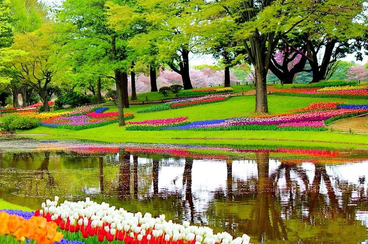 fotos de paisagens naturais flores holanda