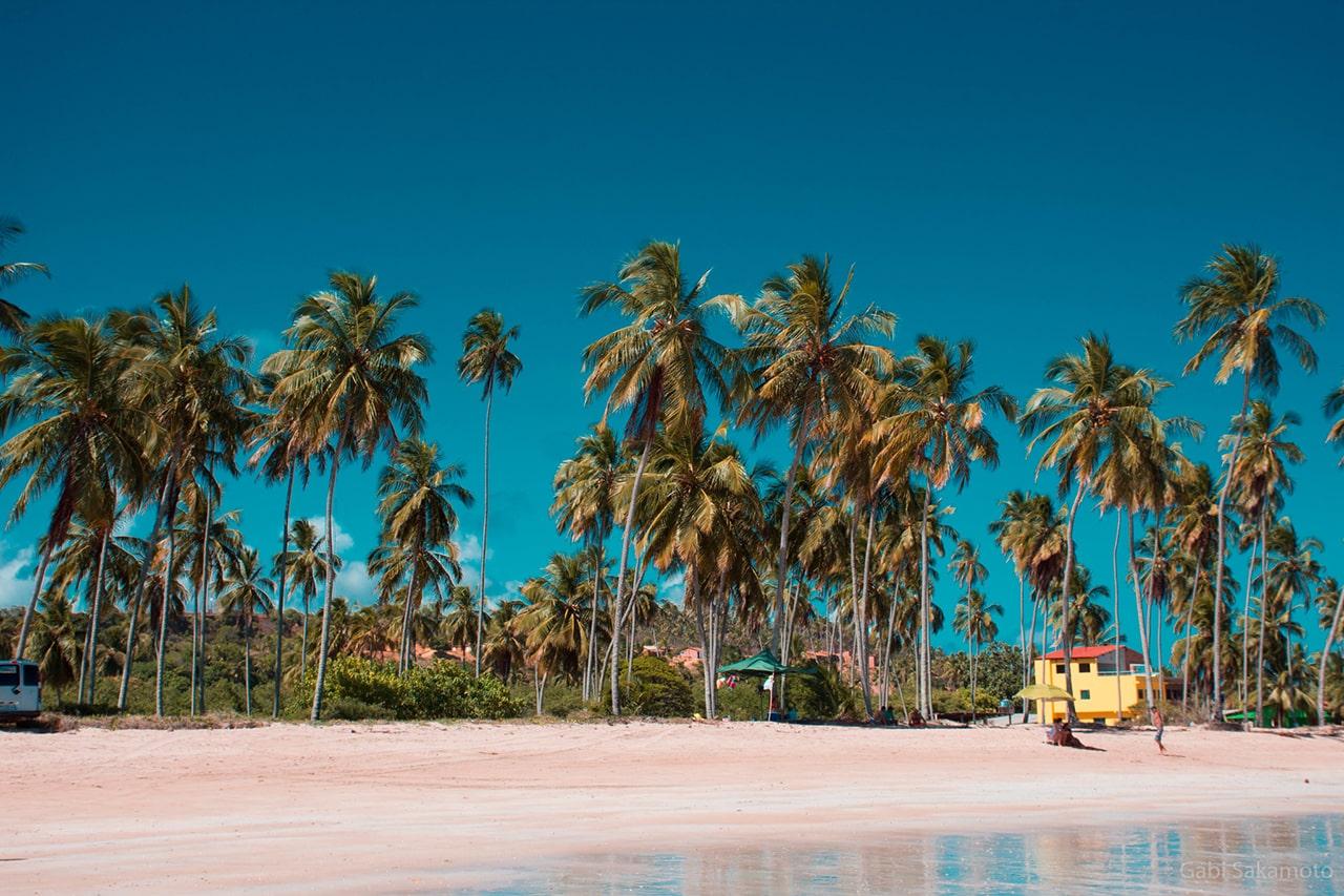 fotos da ilha de Maragogi