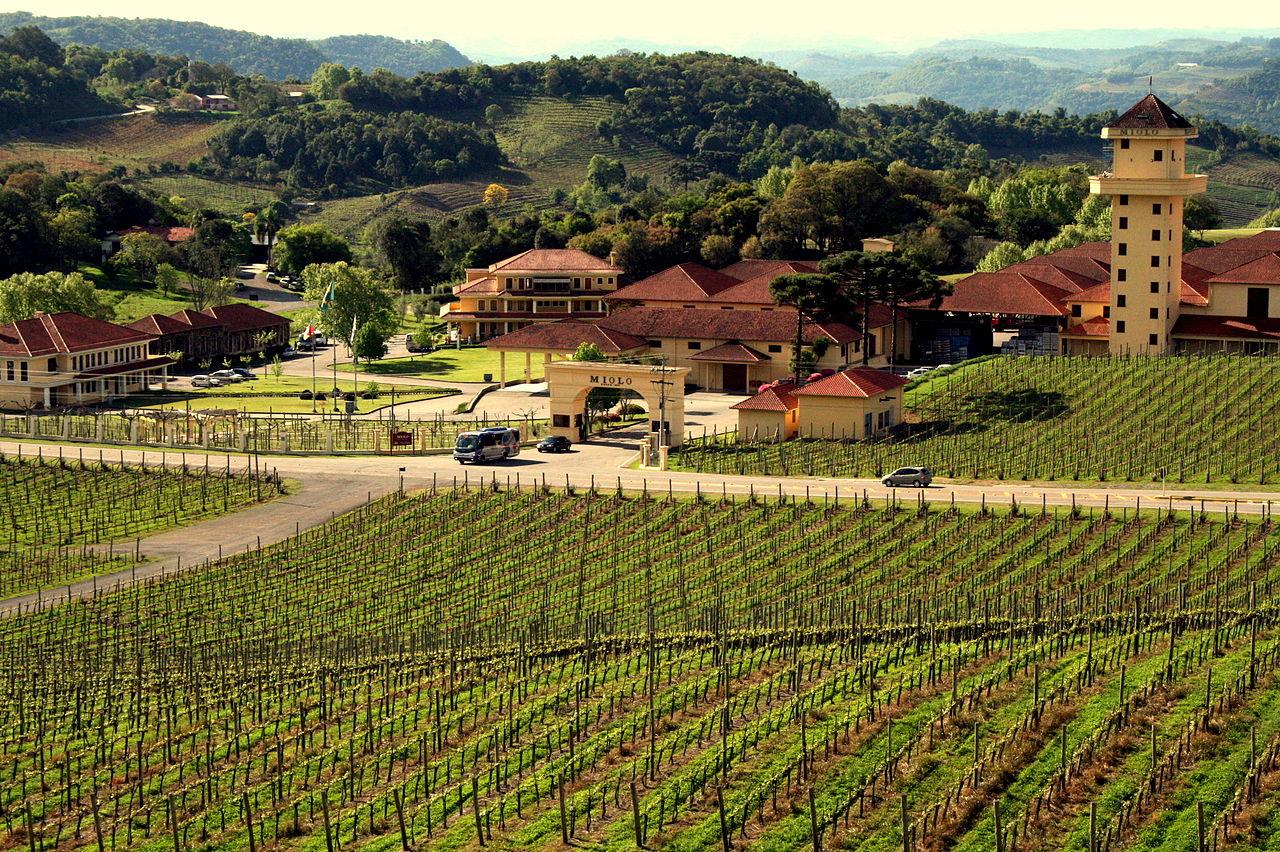 lugares para beber vinho no brasil
