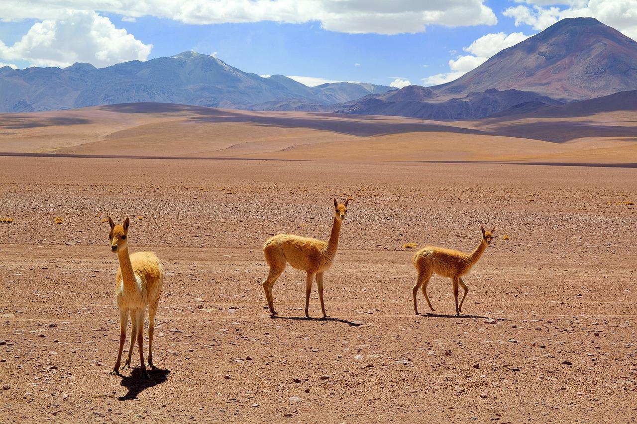 Viagem ao Chile